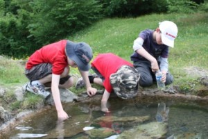 Solferino tadpoles