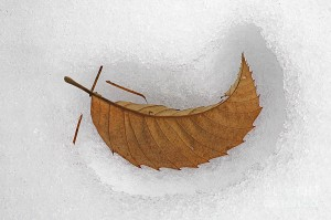 crescent-leaf-in-snow-mike-nellums