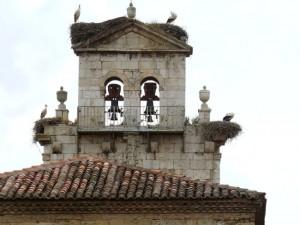 Camino_storks
